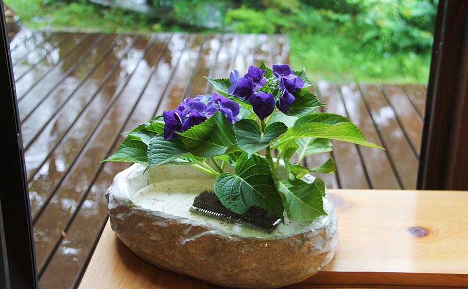 梅雨の紫陽花とウッドデッキ